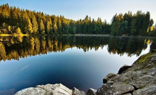 Traversée de la Forêt Noire en liberté