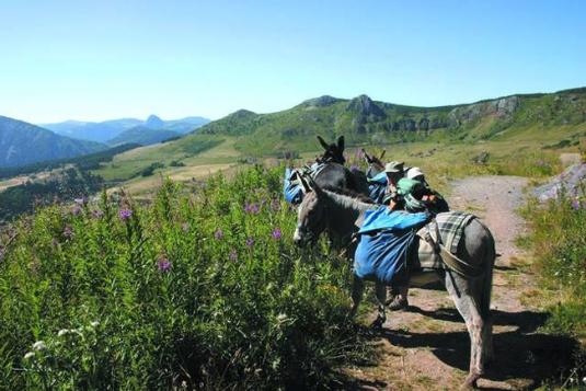 Ardèche en liberté avec un âne