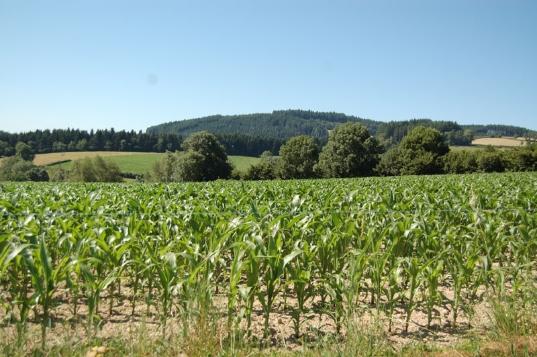 Chemins de Compostelle : Cluny - Charlieu