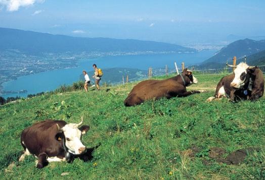 Les Sommets du Lac d'Annecy en Liberté - 5j