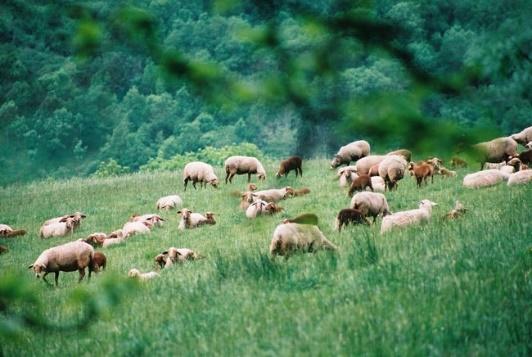 Aveyron en Famille